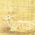 Deer by Hakon Soreide