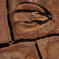 Deer Imprint In Mud by Sandra Bronstein