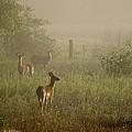 Deer In Foggy Field by Wendy Tompkins