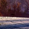 Deer In The Distance by Jake Busby