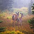 Deer In The Fog In Paradise Park In Mt by Craig Tuttle