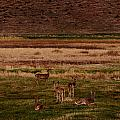 Deer In The Golden Meadow by Rebecca Akporiaye
