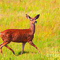 Deer In The Meadow by Wingsdomain Art and Photography