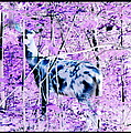 Deer In The Woods Inverted Negative Image by Rose Santuci-Sofranko