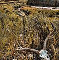 Deer Skull In Montana Badlands by Jill Battaglia