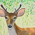 Deer Visitor Under The Willow Tree by Jeanne Kay Juhos
