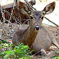 Deer Watching by Jeff Lowe