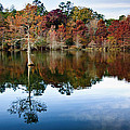 Beaver's Bend Defiant Cypress by Tamyra Ayles