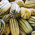 Delicata Winter Squash by Brooke Roby