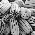 Delicata Winter Squash In Black by Brooke Roby