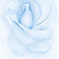 Delicate Blue Rose Flower by Jennie Marie Schell