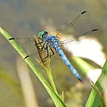 Delicate Dragonfly by Michelle Cassella