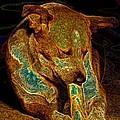 Delicious Bone by One Rude Dawg Orcutt