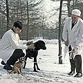 Demikhov's Laboratory Dogs, 1967 by Ria Novosti