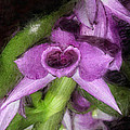 Dendrobium Anosium by Joseph Contello