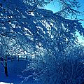Denmark In Winter by Colette V Hera  Guggenheim