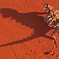 Desert Adapted Thorny Devil Australia by Paul D Stewart