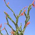 Desert Bloom by