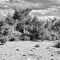 Desert Cloud Bw Palm Springs by William Dey