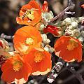 Desert Flowers by Kume Bryant