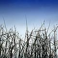 Desert Grass by Antoni Halim