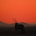 Desert Horns by Alistair Lyne