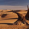 Desert Luxury by Ivan Slosar