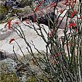 Desert Spring by Linda Dunn