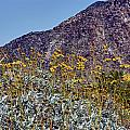Desert Yellow by Linda Dunn