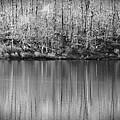 Desolate Splendor Bw by David Dehner