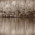 Desolate Splendor S by David Dehner