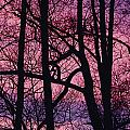 Detail Of Bare Trees Silhouetted by Mattias Klum