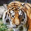 Detroit Tiger by Michelle Calkins
