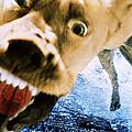 Devil Dog by Jill Reger