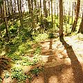 Devonian Park Pathway by Erica Rieger