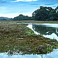 Devoran River by Brian Roscorla