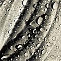 Dew Drops by Christina Klausen