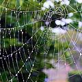 Dewdrops Dimension by Carol Groenen