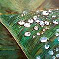 Dewdrops by Holly Suzanne