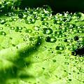 Dewdrops On Leaf by Thomas R Fletcher