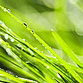 Dewy Green Grass  by Elena Elisseeva