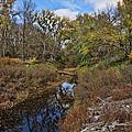 Diamond Creek by Alan Hutchins