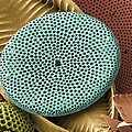 Diatoms, Sem by Steve Gschmeissner
