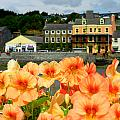 Dingle And Flower Pot by David Resnikoff