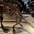 Dinosaurs by Pravine Chester