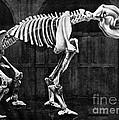 Diprotodon, Cenozoic Mammal by Science Source