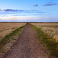 Dirt Road Through The Prairie by Jill Battaglia