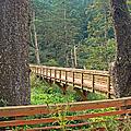 Discovery Trail Bridge by Pamela Patch