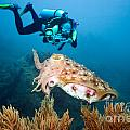 Diver And Cuttlefish by MotHaiBaPhoto Prints