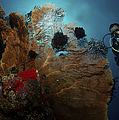 Diver And Sea Fan At Liberty Wreck by Mathieu Meur